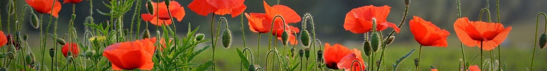flower-1449981_1920 (1) (1)